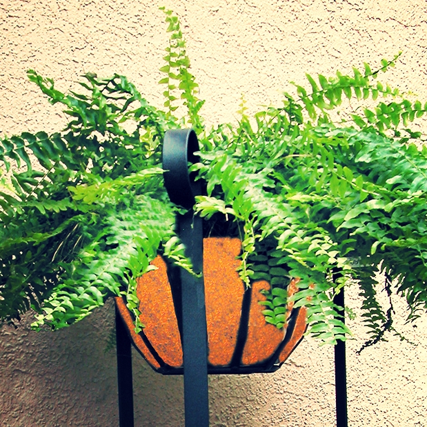 Fern Stand Coco Liner