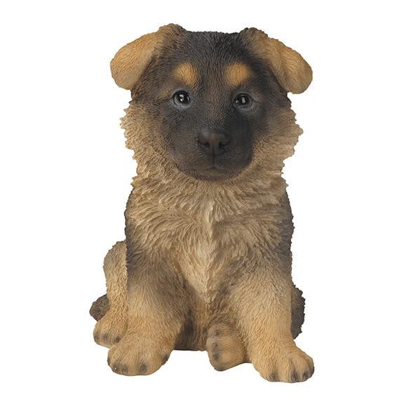 Alsatian Puppy